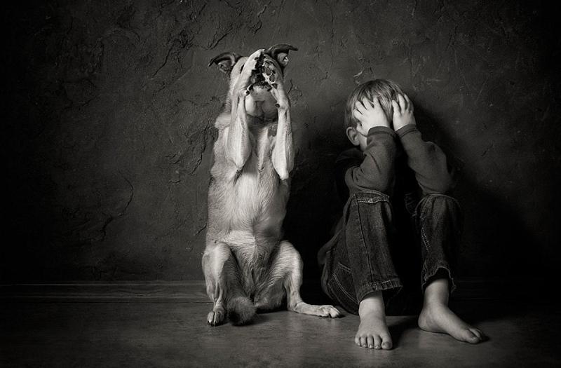 Οι εισαγγελείς ενημερώνονται για την κακοποίηση ζώων, παιδιών και γυναικών  | ΤΟ ΠΟΝΤΙΚΙ